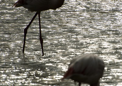 2 flamants roses au crépuscule