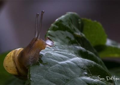 Escargot curieux