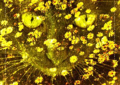 Yellow Anima